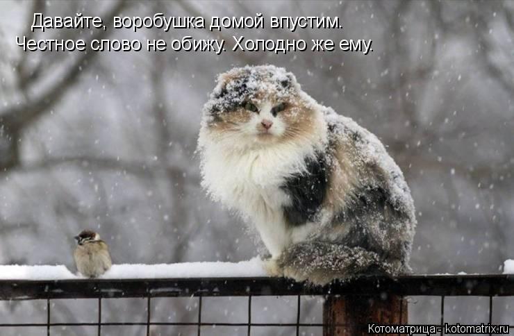 Котоматрица: Давайте, воробушка домой впустим. Честное слово не обижу. Холодно же ему.