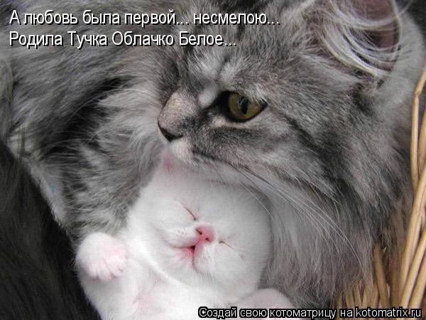 Котоматрица: А любовь была первой... несмелою... Родила Тучка Облачко Белое...