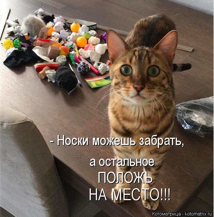 Котоматрица: - Носки можешь забрать, а остальное ПОЛОЖЬ НА МЕСТО!!!