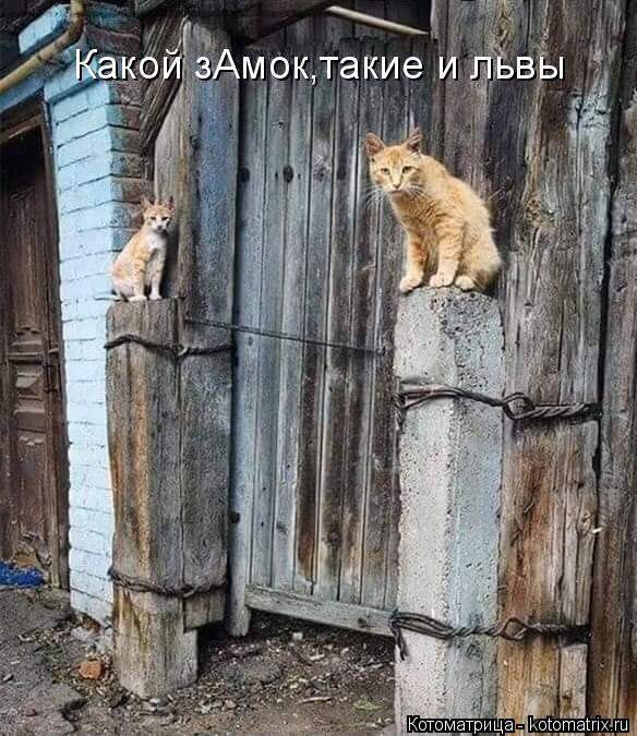 Котоматрица: Какой зАмок,такие и львы