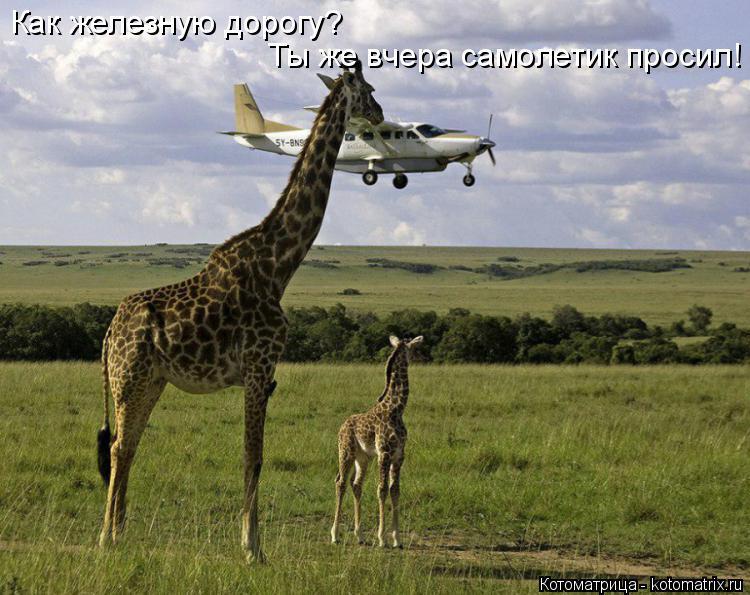 Котоматрица: Как железную дорогу? Ты же вчера самолетик просил!