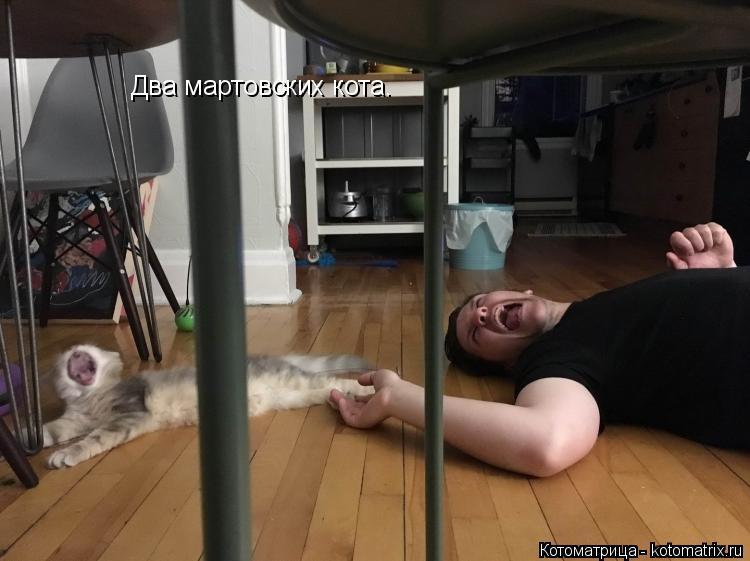 Котоматрица: Два мартовских кота.