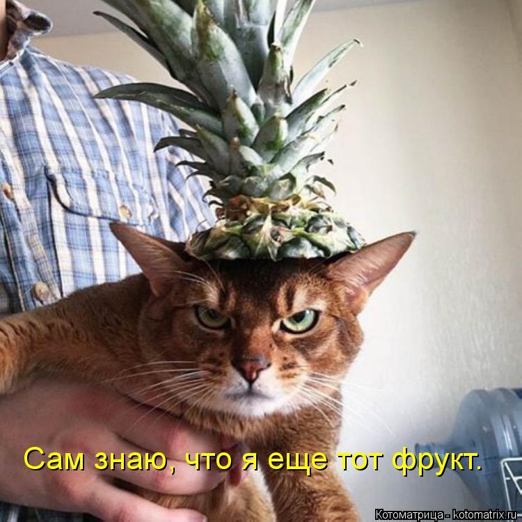 Котоматрица: Сам знаю, что я еще тот фрукт.