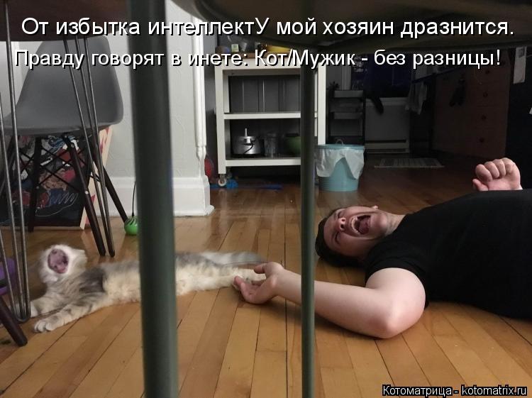 Котоматрица: От избытка интеллектУ мой хозяин дразнится. Правду говорят в инете: Кот/Мужик - без разницы!