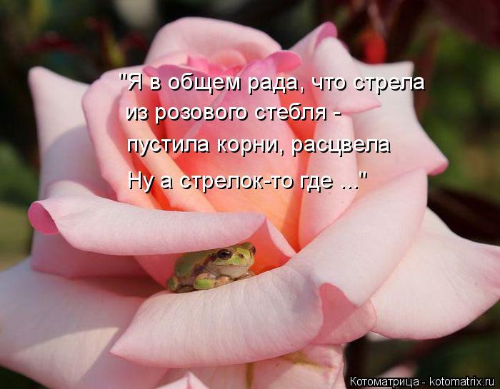 """Котоматрица: из розового стебля -  пустила корни, расцвела """"Я в общем рада, что стрела Ну а стрелок-то где ..."""""""