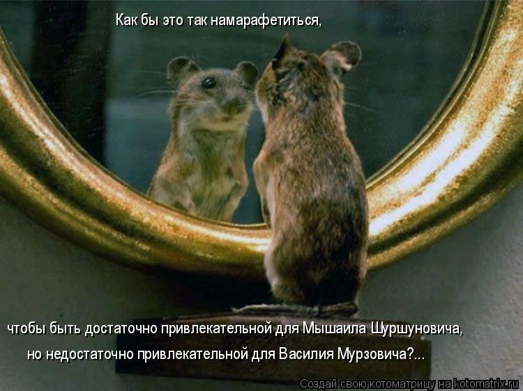 Котоматрица: чтобы быть достаточно привлекательной для Мышаила Шуршуновича,  Как бы это так намарафетиться,   но недостаточно привлекательной для Васил