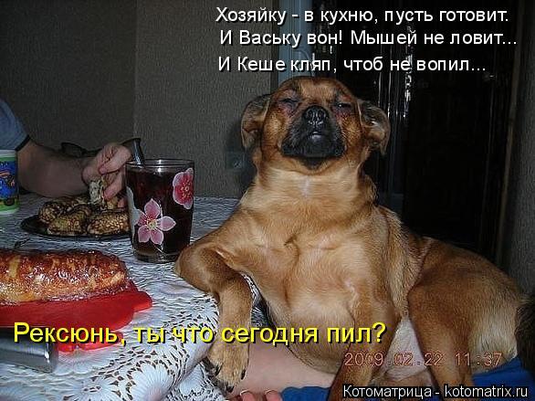 Котоматрица: Хозяйку - в кухню, пусть готовит. И Ваську вон! Мышей не ловит... И Кеше кляп, чтоб не вопил... Рексюнь, ты что сегодня пил?