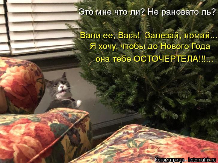 Котоматрица: Это мне что ли? Не рановато ль? Я хочу, чтобы до Нового Года Вали ее, Вась!  Залезай, ломай.... она тебе ОСТОЧЕРТЕЛА!!!...
