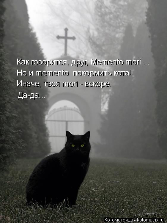 Котоматрица: Как говорится, друг, Memento mori ... Но и memento  покормить кота! Иначе, твоя mori - вскоре. Да-да...