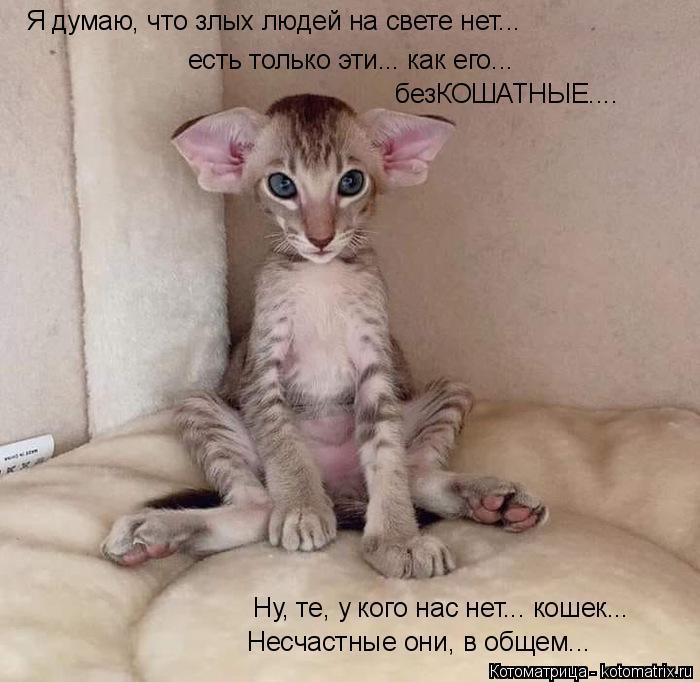 Котоматрица: Я думаю, что злых людей на свете нет... есть только эти... как его... безКОШАТНЫЕ.... Ну, те, у кого нас нет... кошек... Несчастные они, в общем...