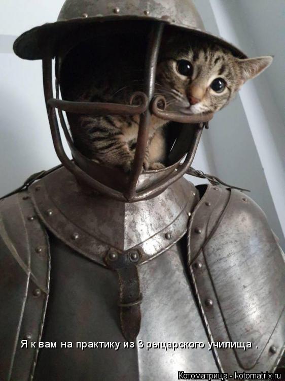 Котоматрица: Я к вам на практику из 3 рыцарского училища .