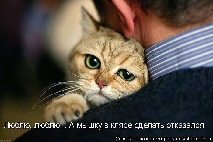 Котоматрица: Люблю, люблю... А мышку в кляре сделать отказался