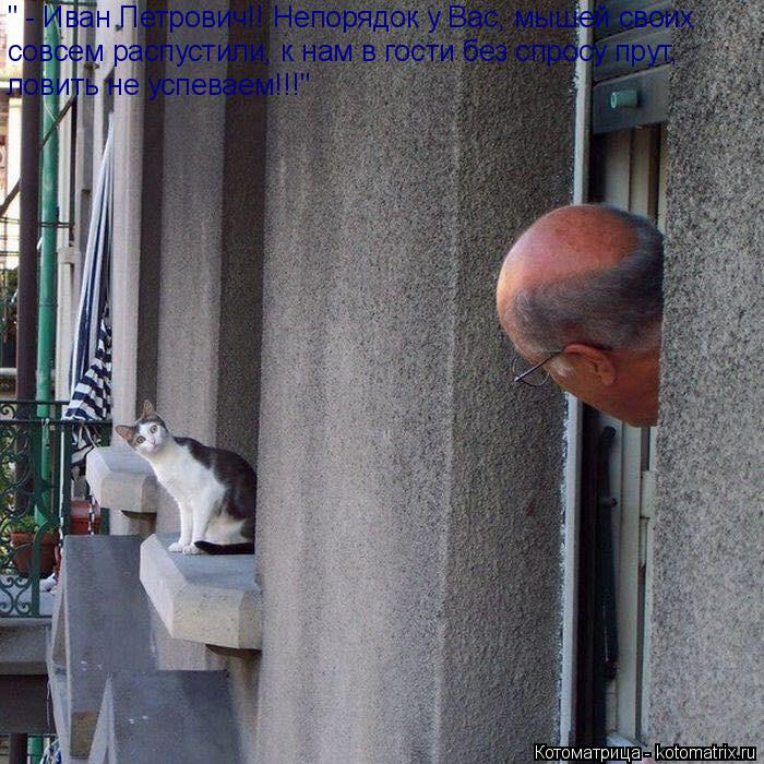 """Котоматрица: """" - Иван Петрович!! Непорядок у Вас, мышей своих   совсем распустили, к нам в гости без спросу прут,   ловить не успеваем!!!"""""""