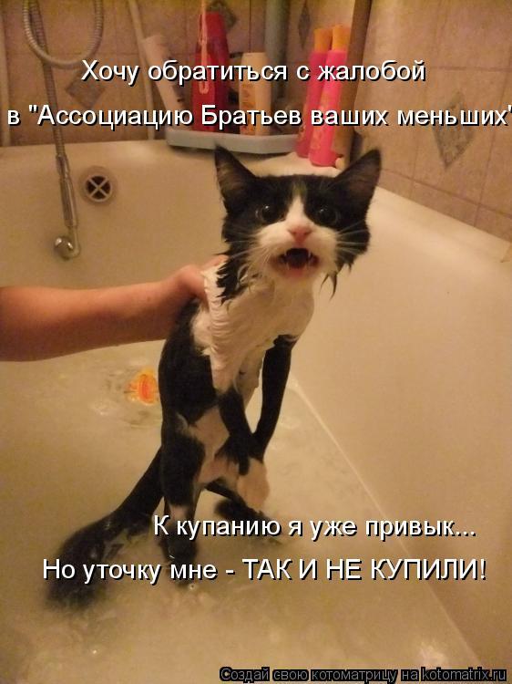 """Котоматрица: в """"Ассоциацию Братьев ваших меньших"""" К купанию я уже привык... Хочу обратиться с жалобой Но уточку мне - ТАК И НЕ КУПИЛИ!"""