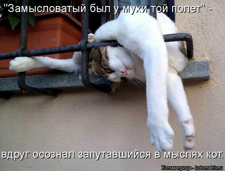 """Котоматрица: """"Замысловатый был у мухи той полет"""" - вдруг осознал запутавшийся в мыслях кот..."""