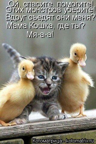 Котоматрица: Ой, спасите, помогите! Этих монстров уберите! Вдруг съедят они меня? Мама Кошка, где ты? Мя-а-а!