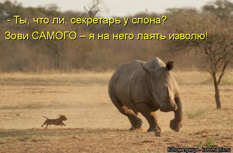 Котоматрица: - Ты, что ли, секретарь у слона? Зови САМОГО – я на него лаять изволю!