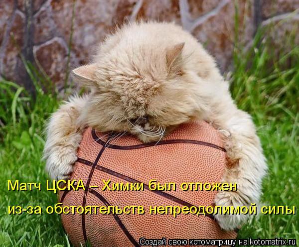 Котоматрица: Матч ЦСКА – Химки был отложен из-за обстоятельств непреодолимой силы