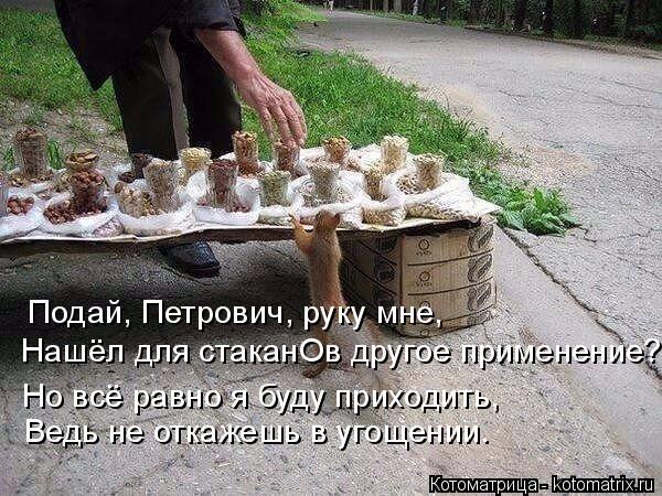 Котоматрица: Подай, Петрович, руку мне, Нашёл для стаканОв другое применение? Но всё равно я буду приходить,  Ведь не откажешь в угощении.
