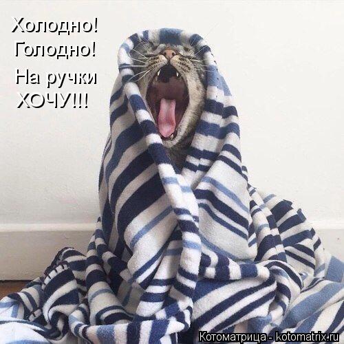 Котоматрица: Холодно! Голодно! На ручки ХОЧУ!!!