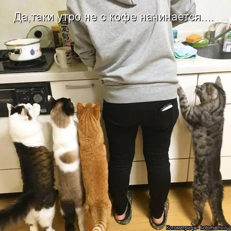 Котоматрица: Да,таки утро не с кофе начинается....