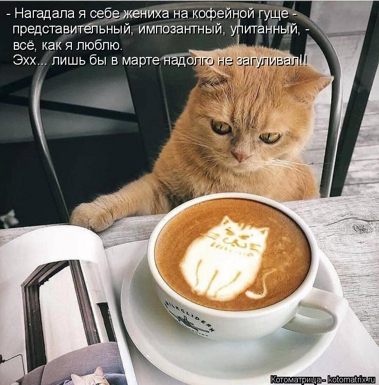Котоматрица: - Нагадала я себе жениха на кофейной гуще - представительный, импозантный, упитанный, - всё, как я люблю. Эхх... лишь бы в марте надолго не загул