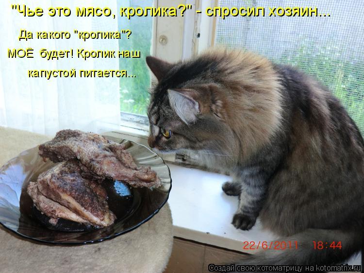 """Котоматрица: """"Чье это мясо, кролика?"""" - спросил хозяин... Да какого """"кролика""""?  капустой питается... МОЁ  будет! Кролик наш"""