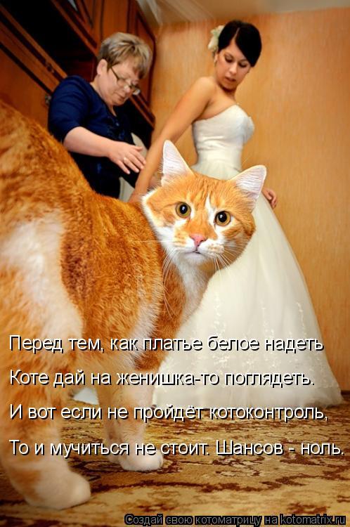 Котоматрица: Перед тем, как платье белое надеть Коте дай на женишка-то поглядеть. И вот если не пройдёт котоконтроль, То и мучиться не стоит. Шансов - ноль.