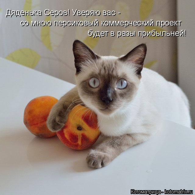 Котоматрица: Дяденька Серов! Уверяю вас - со мною персиковый коммерческий проект  будет в разы прибыльней!