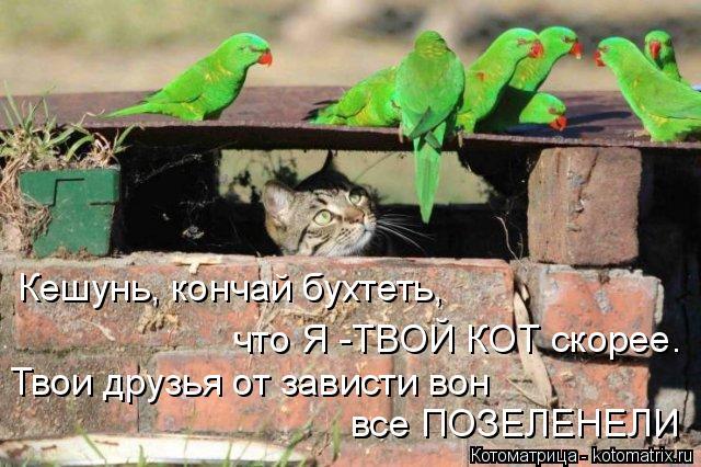 Котоматрица: Кешунь, кончай бухтеть,  что Я -ТВОЙ КОТ скорее. Твои друзья от зависти вон  все ПОЗЕЛЕНЕЛИ