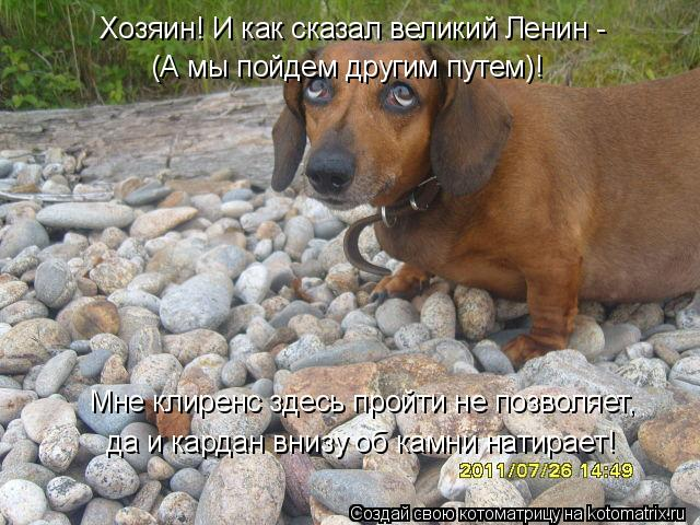 Котоматрица: Мне клиренс здесь пройти не позволяет,  (А мы пойдем другим путем)! Хозяин! И как сказал великий Ленин - да и кардан внизу об камни натирает!