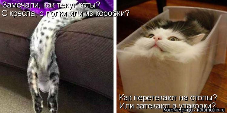 Котоматрица: Замечали, как текут коты? С кресла, с полки или из коробки? Как перетекают на столы? Или затекают в упаковки?