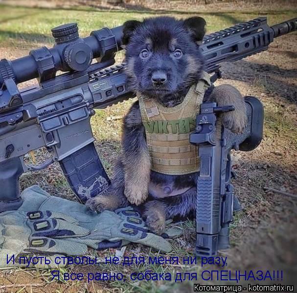 Котоматрица: И пусть стволы, не для меня ни разу, Я все равно, собака для СПЕЦНАЗА!!!