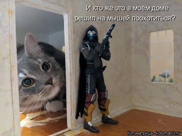 Котоматрица: И кто же это в моём доме решил на мышей поохотиться?