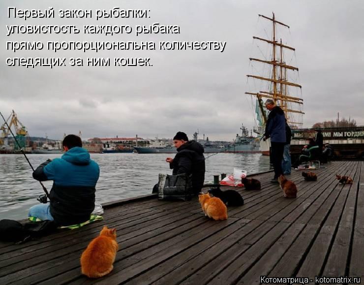 Котоматрица: уловистость каждого рыбака прямо пропорциональна количеству следящих за ним кошек. Первый закон рыбалки: