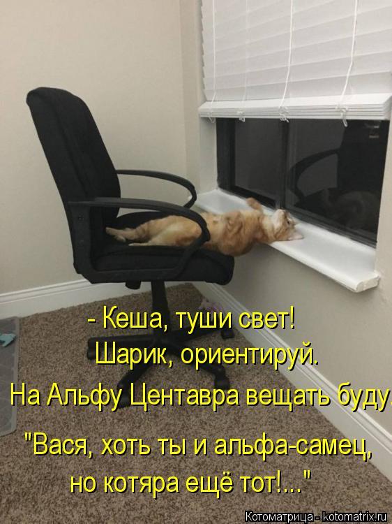 """Котоматрица: - Кеша, туши свет! На Альфу Центавра вещать буду. Шарик, ориентируй. """"Вася, хоть ты и альфа-самец,  но котяра ещё тот!..."""""""