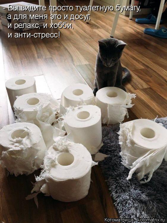 Котоматрица: - Вы видите просто туалетную бумагу, а для меня это и досуг, и релакс, и хобби,  и анти-стресс!