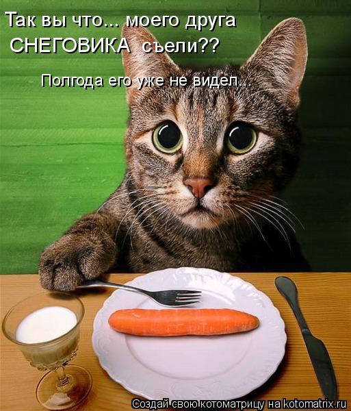Котоматрица: Полгода его уже не видел... Так вы что... моего друга СНЕГОВИКА  съели??