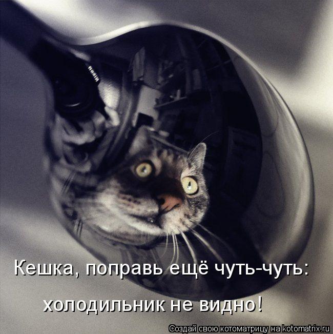 Котоматрица: Кешка, поправь ещё чуть-чуть: холодильник не видно!