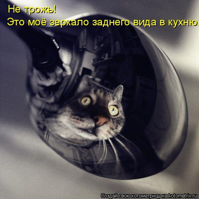 Котоматрица: Не трожь! Это моё зеркало заднего вида в кухню.
