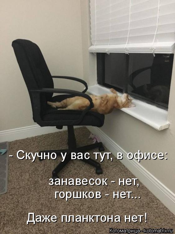 Котоматрица: - Скучно у вас тут, в офисе: занавесок - нет,     горшков - нет... Даже планктона нет!
