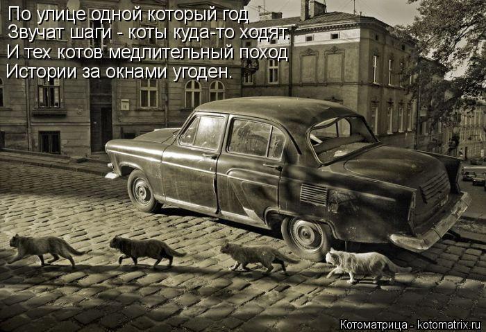 Котоматрица: По улице одной который год Звучат шаги - коты куда-то ходят. И тех котов медлительный поход Истории за окнами угоден.