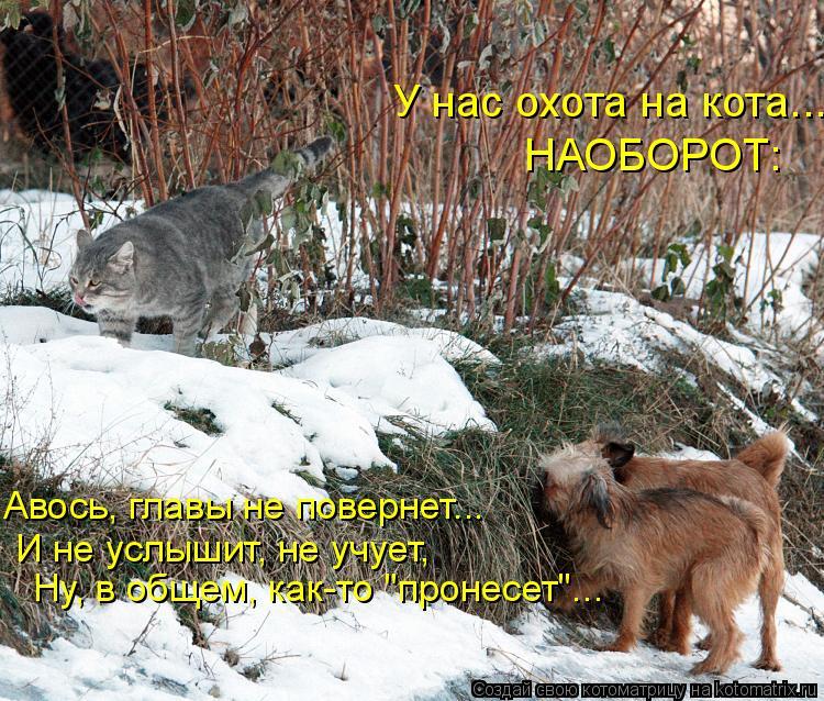 """Котоматрица: У нас охота на кота...  НАОБОРОТ: Авось, главы не повернет...  И не услышит, не учует, Ну, в общем, как-то """"пронесет""""..."""
