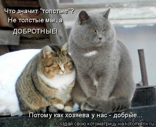 """Котоматрица: Что значит """"толстые""""? Не толстые мы, а  ДОБРОТНЫЕ! Потому как хозяева у нас - добрые..."""