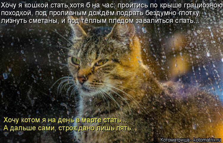 Котоматрица: Хочу я кошкой стать,хотя б на час: пройтись по крыше грациозною походкой, под проливным дождём подрать бездумно глотку, лизнуть сметаны, и п?