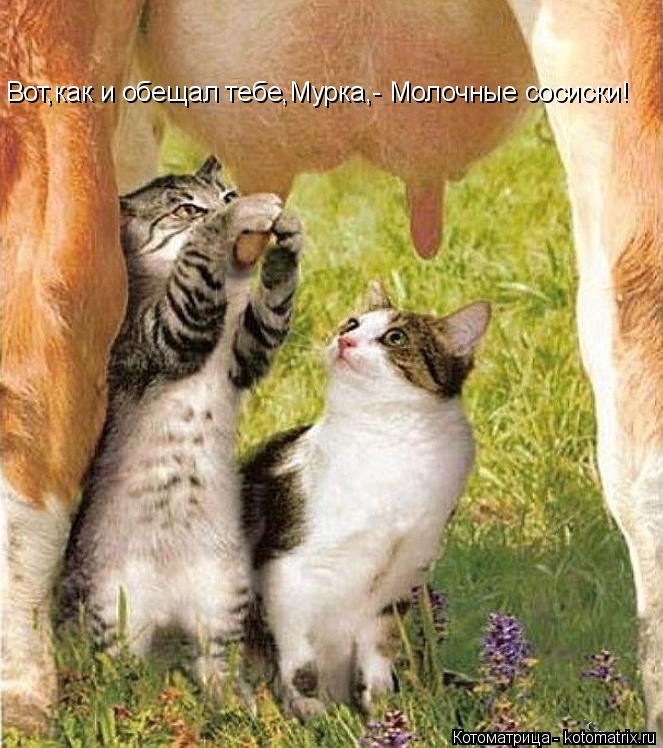 Котоматрица: Вот,как и обещал тебе,Мурка,- Молочные сосиски!