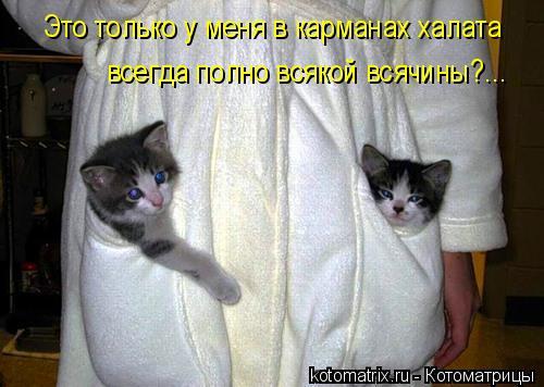 Котоматрица: Это только у меня в карманах халата всегда полно всякой всячины?...