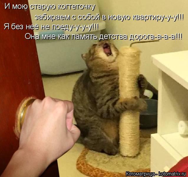 Котоматрица: И мою старую когтеточку  забираем с собой в новую квартиру-у-у!!! Она мне как память детства дорога-а-а-а!!! Я без неё не поеду-у-у-у!!!