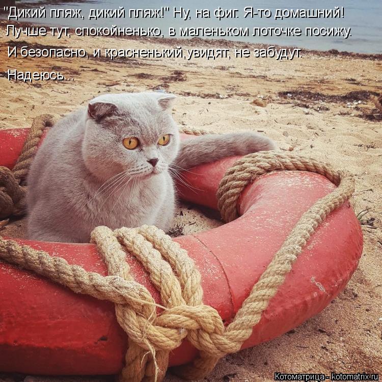 """Котоматрица: """"Дикий пляж, дикий пляж!"""" Ну, на фиг. Я-то домашний! Лучше тут, спокойненько, в маленьком лоточке посижу. И безопасно, и красненький,увидят, не з"""