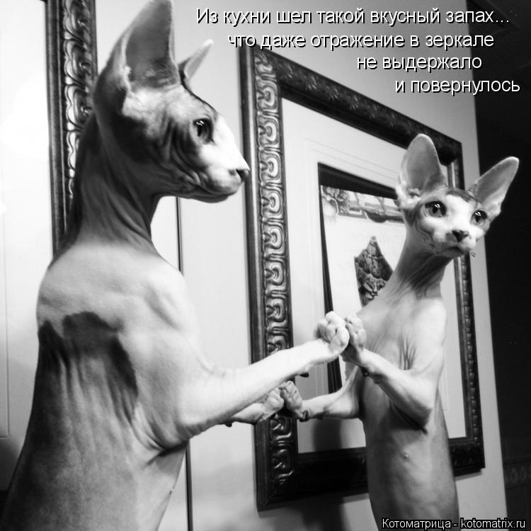 Котоматрица: что даже отражение в зеркале не выдержало и повернулось  Из кухни шел такой вкусный запах...